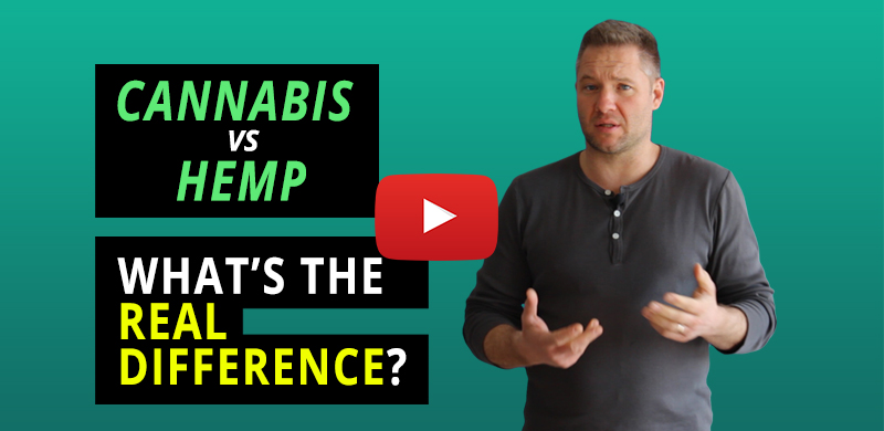 001-Cannabis_vs-Hemp_Real_Difference_BlogPost_emailing