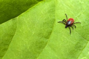 3-Most-Inspiring-Stories-of-Successful-Lyme-Disease-Treatment