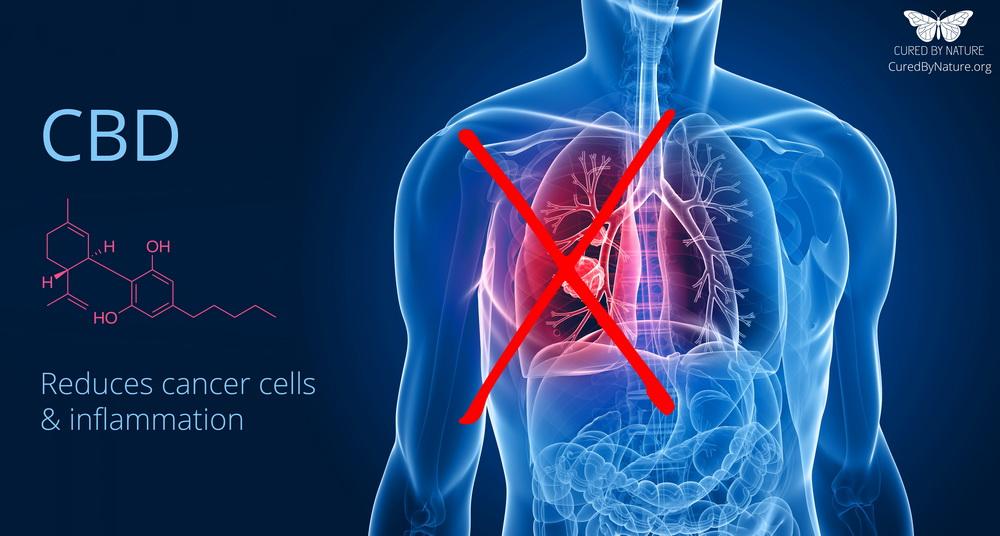 cbd-cannabidiol-reduces-inflammation-cancer-cells_curedbynature