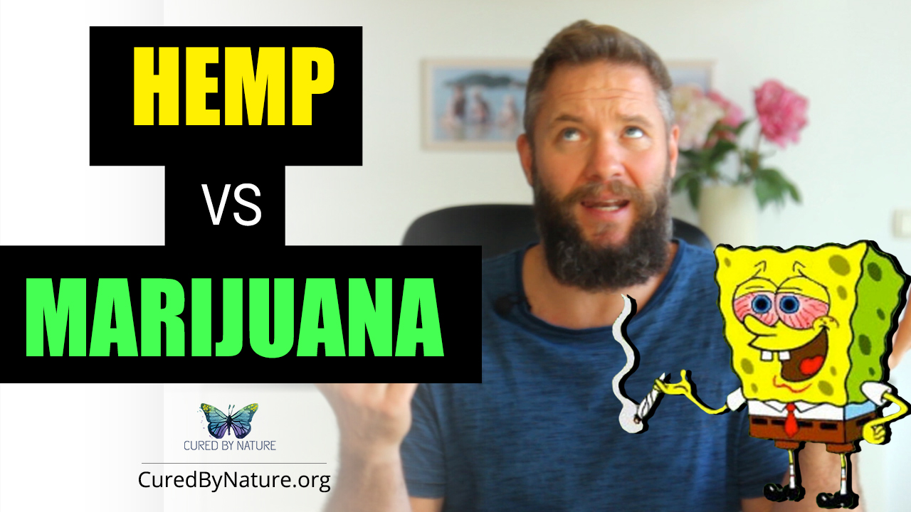 Hemp-vs-Marijuana-YT