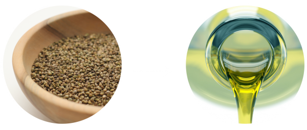 hemp-seeds-to-hemp-seed-oil